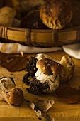 Little porcino mushroom