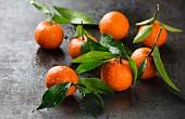 Mehrere Mandarinen mit Blättern