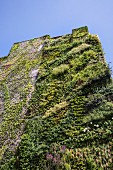 Vertical garden on the façade of the Caixa Forum in Madrid, Spain