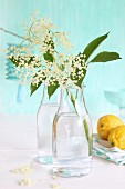 Elder flowers in glass bottle next to lemons