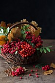 Rowan berries and autumn leaves in a basket