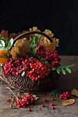 Vogelbeeren und Herbstblätter in einem Korb