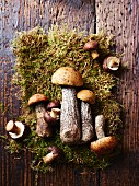Fresh boletes and chestnut mushrooms on moss (seen from above)