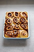 Cinnamon rolls in an enamel baking tin