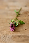 Clover flowers on a wooden background