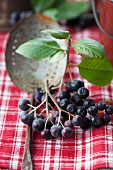 Aronia berries on crockery
