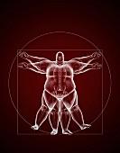 Übergewichtiger vitruvianischer Mann