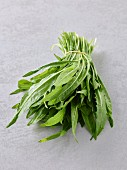 A bundle of puntarelle (chicory)
