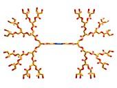 Dendrimer, molecular structure