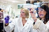Organic chemistry research
