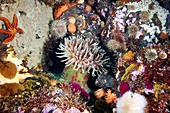 Sea anemones and marine life