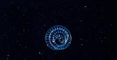 Planktonic polychaete worm