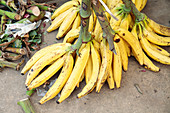 Bananas for sale in market