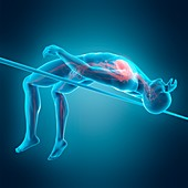 Anatomy of person high jumping, illustration