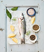 Fresh uncooked Mediterranean seabass fish with lemon, herbs, ice and spices on rustic blue wooden board