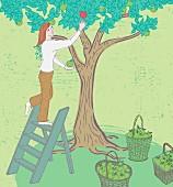 Frau pflückt grüne Äpfel und greift nach einem roten Apfel
