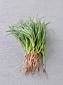 Fresh garlic chives