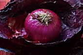 Red, cut onion on a red cabbage leaf