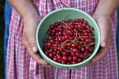 A country woman holding a bowl of redcurrants