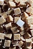 Brown sugar cubes with single white sugar cube