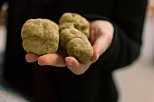 A hand holding white truffles in the Piedmont region of Italy