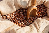 Hazelnuts with a wooden scoop in a sack in the Piedmont region of Italy