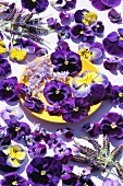 Pansies, lilac blossoms and lavender blossoms on a plate