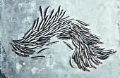 A swarm of sardines