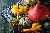 Assortment of different edible and decorative pumpkins and autumn berries in black decorative tray