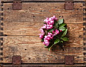 Blossoming branch of Pink apple tree on wooden background