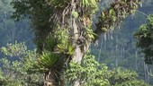 Rainforest scene, Ecuador