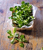Fresh lamb's lettuce in and in front of a woodchip basket