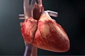 The Heart, artwork
