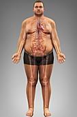 Obesity, artwork