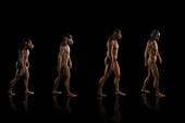 Human Evolution, artwork