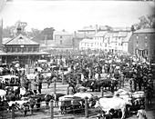 Oxford cattle market, 1890s