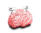 Brain plasticity, conceptual image