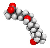 Bempedoic acid drug molecule, illustration