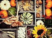 Herbststillleben in Setzkasten