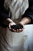 Woman s hands holding blackberries