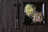 Fresh Garlic and Radish Sprouts on black square plate with chopsticks over dark gray textile