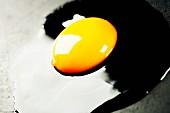 Ein frisches aufgeschlagenes Hühnerei in der Pfanne (Nahaufnahme)