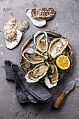 Open Oysters on metal plate with ice and lemon