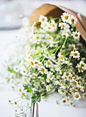 Elderflower ingredient