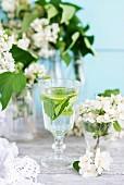 Glas Wasser mit Minze