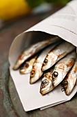 Fresh sardines in newspaper