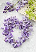 Love-heart made from Wisteria florets