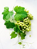 Green grapes with leaves
