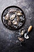 Oysters on ice in plate on dark stone texture background copy space
