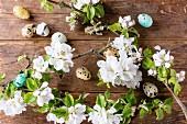 Bunte Wachteleier mit Kirschblütenzweigen als Osterdeko auf Holzuntergrund